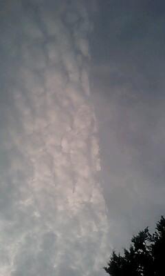 久しぶりの青空にウロコ雲?