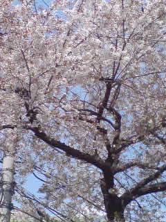 桜が散ったら街に緑が帰ってきた気がする。